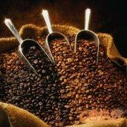 云南咖啡行业遇寒自救度过冰冻期