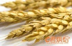 小麦价格整体持稳